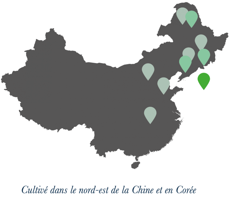 carte chine ginseng